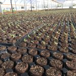 baby-seedling-sprouting