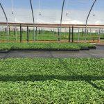 seedlings 9